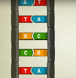 βάσεις DNA-ανακάλυψη